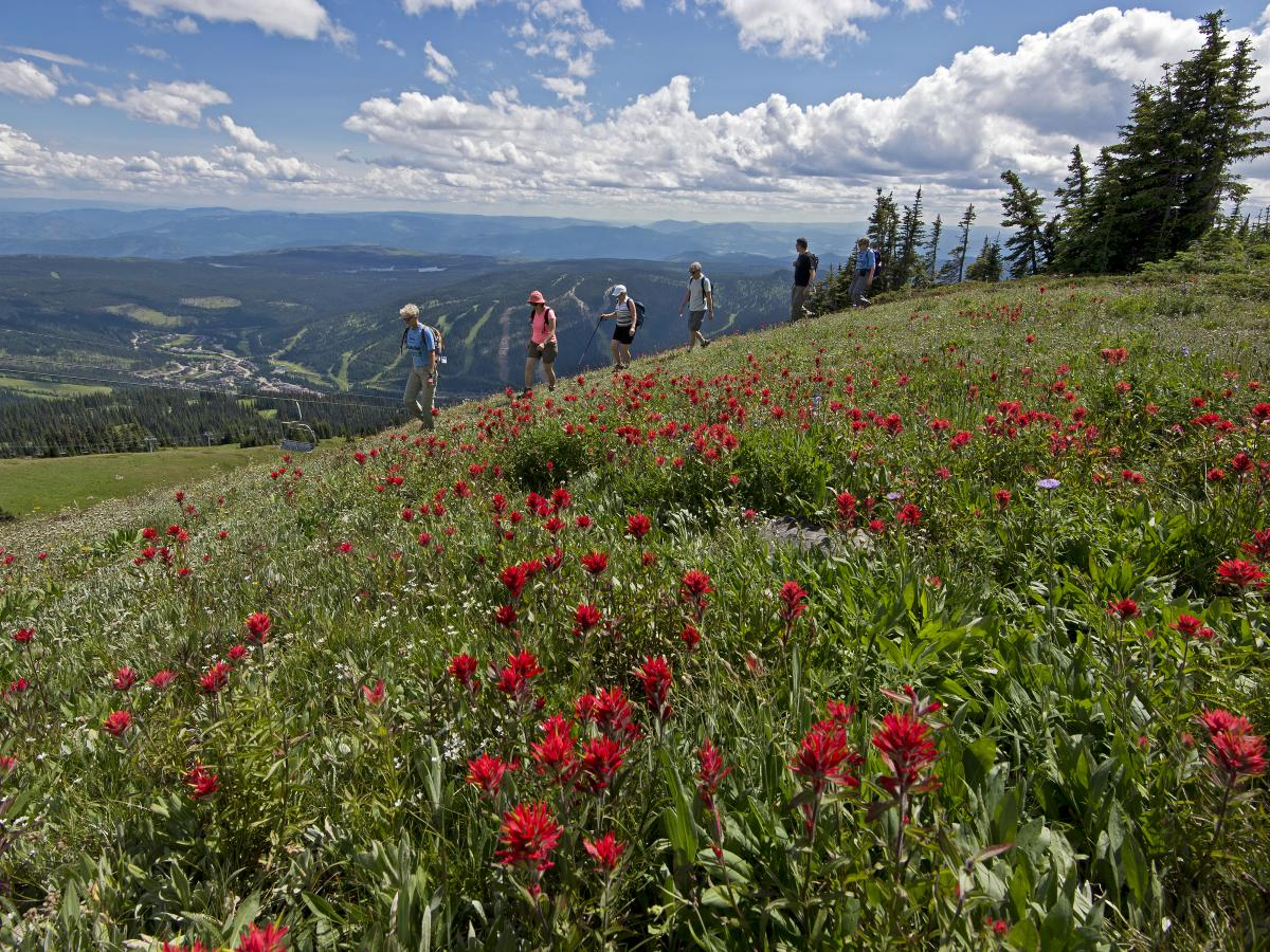 Hiking in the alpine flowers